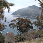 View from Catalina Trail